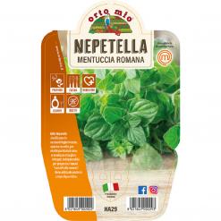 Mentuccia Romana Nepetella in vaso 14 - Aromatiche MasterChef