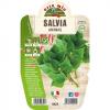 Salvia Ananas in vaso 14 - Aromatiche MasterChef