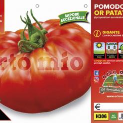 Piantine in pack Pomodoro Patataro varietà Kilotto in pack