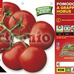 Piantine in pack di Pomodoro a grappolo varietà Horus F1