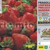 Piantine in pack Fragola unifera precoce Brilla varietà Sandra