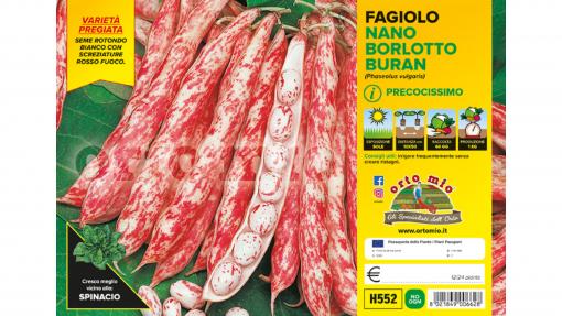 Piantine in pack Fagiolo nano Borlotto varietà Buran
