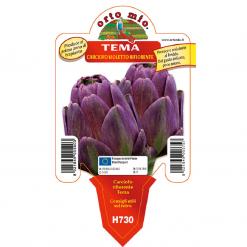 Piantine in vaso 10 Carciofo violetto rifiorente varietà Tema