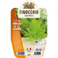 Pianta in vaso Finocchio selvatico - Aromatiche MasterChef