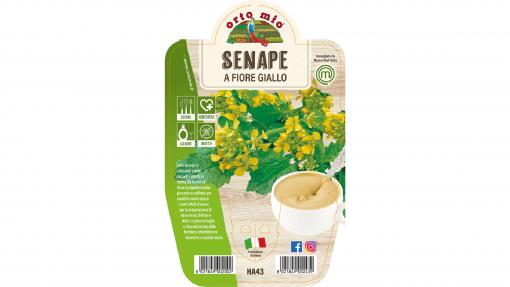 Pianta in vaso Senape - Aromatiche MasterChef