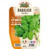 Pianta in vaso Basilico Italiano Genovese - Aromatiche MasterChef