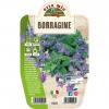 Pianta in vaso Borragine - Aromatiche MasterChef