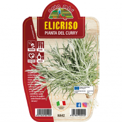 Pianta in vaso Elicrisio o pianta del Curry - Aromatiche MasterChef
