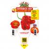 Peperoncino Costarica Zeta Hot - vaso 14